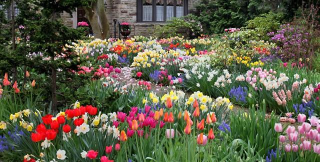 Garten mit blühenden Blumen