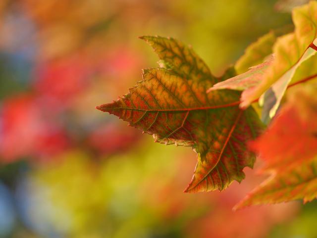 Herbst_Fotografie