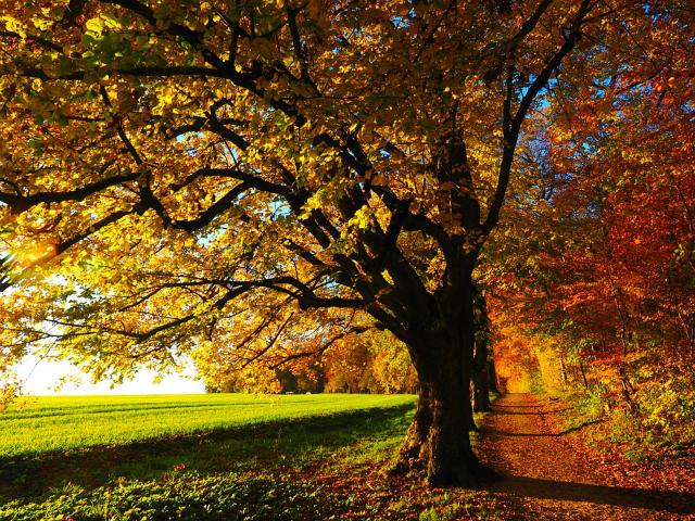 Fototipps_Herbst